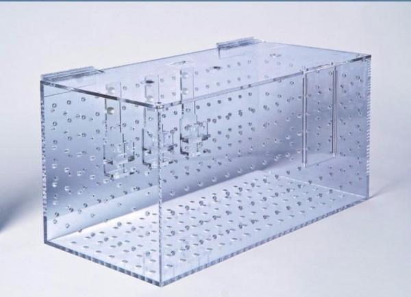 Fisch Eingewöhnungsbox Schwimmschule XL