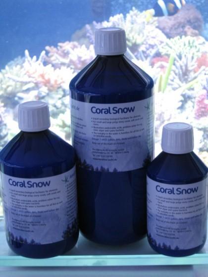 Korallen Zucht Coral Snow